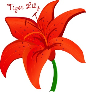 Tiger lily clipart image pretty orange tiger lily flower with jpg