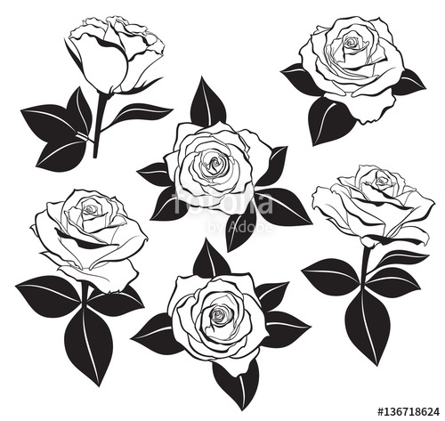 rose outline Vector set of detailed isolated outline rose buds sketches with jpg