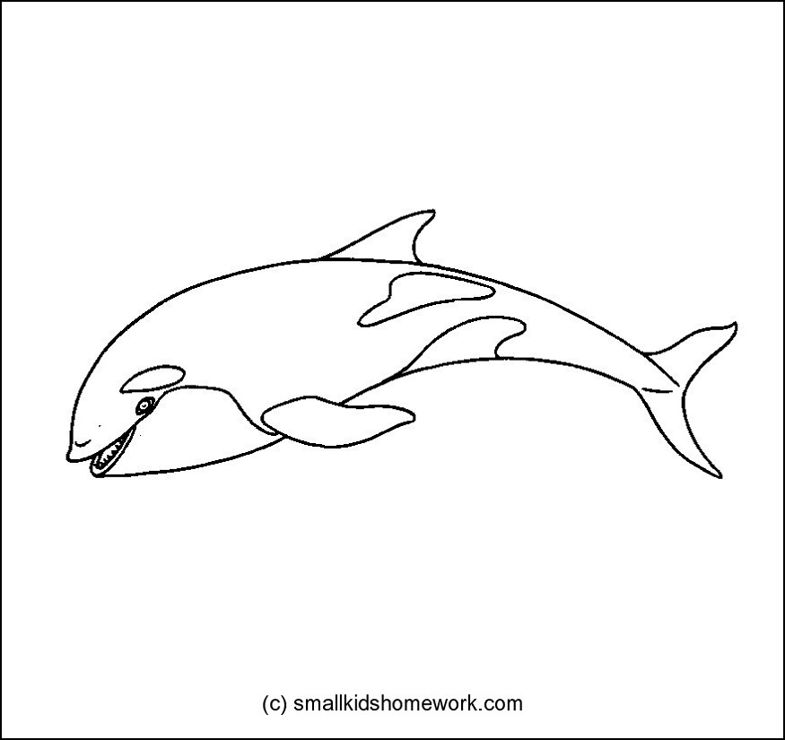 Killer whale outline picture for coloring jpg