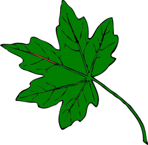 Green maple leaf clip art at vector clip art png