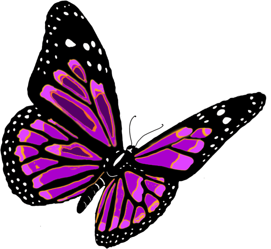Butterfly transparent pictures free icons and backgrounds png 2