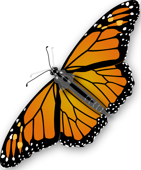 butterfly transparent Free butterfly images download clip art on png