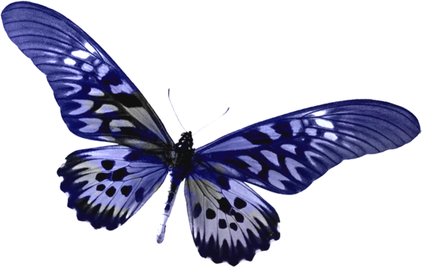 butterfly transparent Blue transparent butterfly clipart gallery yopriceville high png
