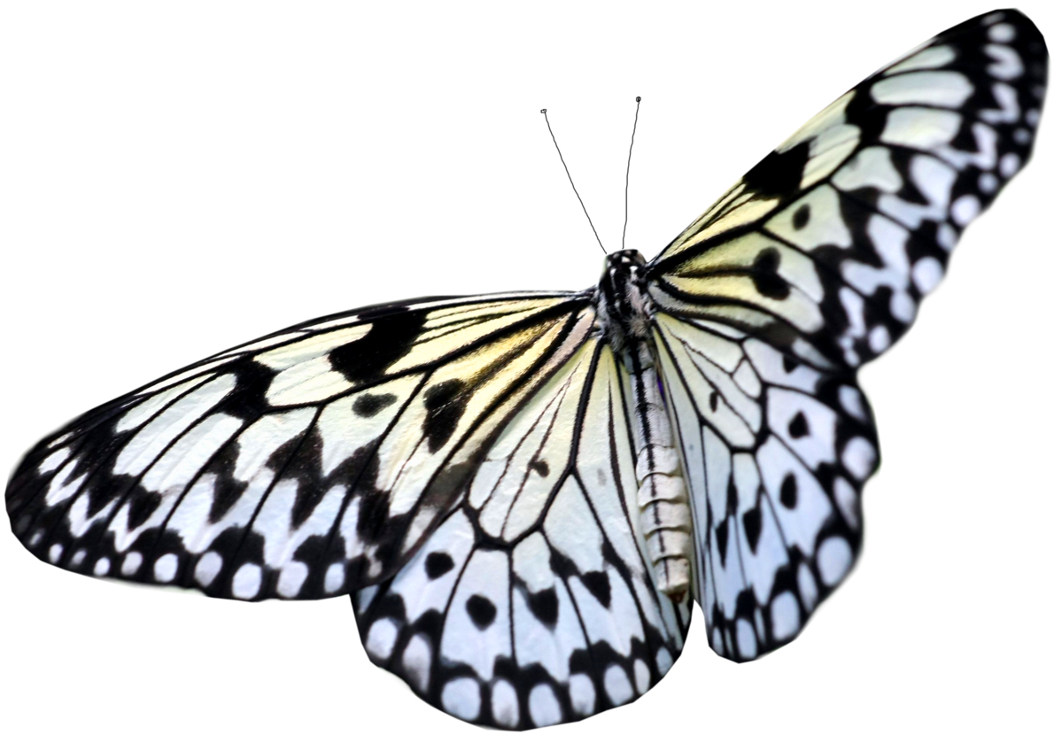 Butterfly transparent pictures free icons and backgrounds png 3