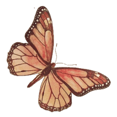 butterfly transparent Butterflies transparent images stick png