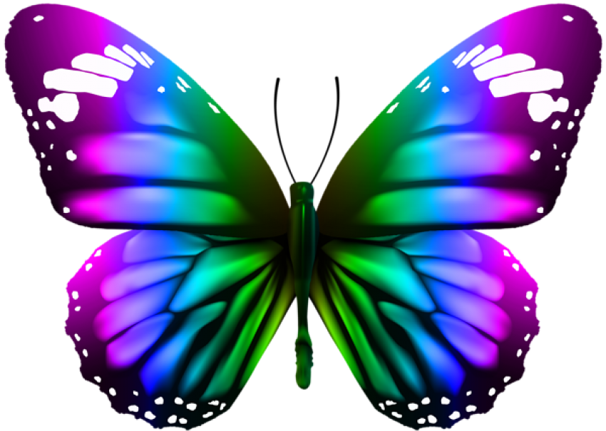 Download butterfly transparent clipart photo top png
