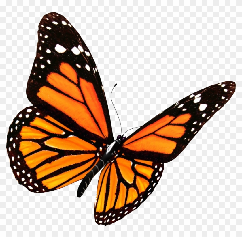 butterfly transparent Monarch butterfly clipart transparent background png