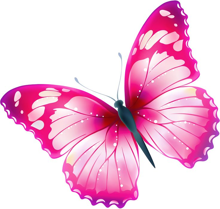 butterfly transparent Images about clipart transparent butterfly on 2 jpg