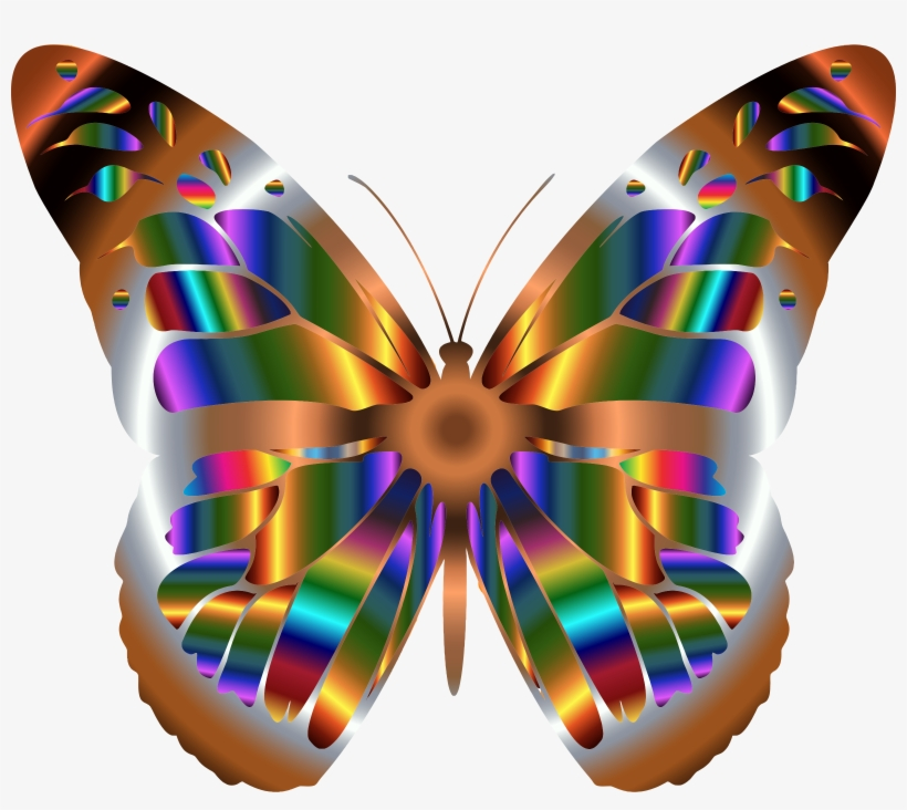 butterfly transparent See here butterfly clipart black and white outline real rainbow png