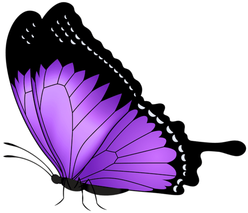 Download purple butterfly transparent clipart photo top png