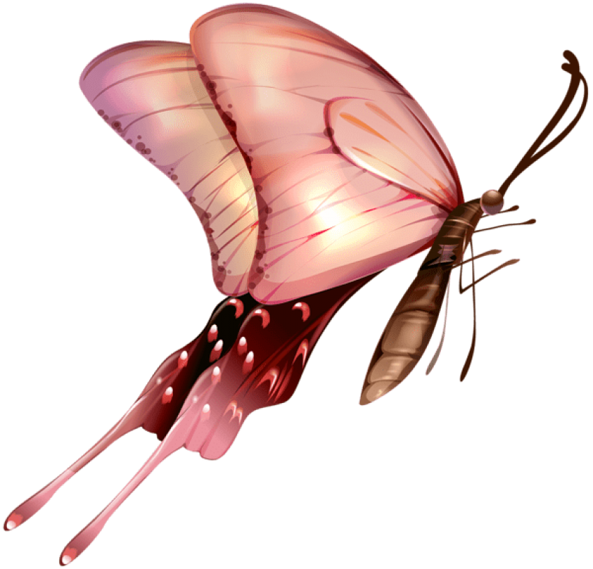 Download butterfly transparent clipart photo top png 2