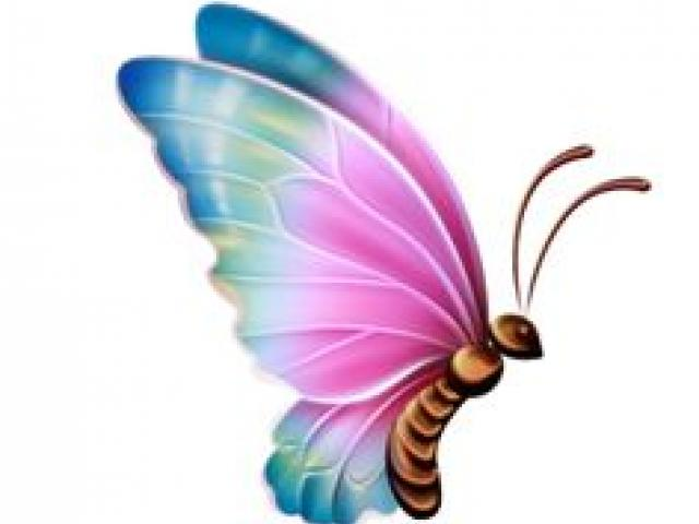 butterfly transparent Butterfly design clipart transparent background 3 jpg