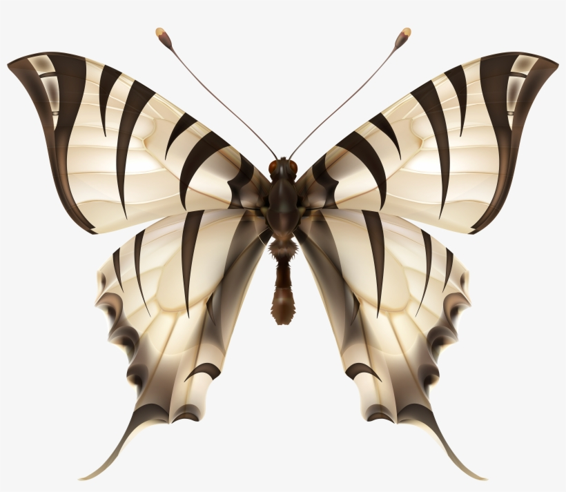 butterfly transparent Butterflies clipart zebra vector graphics free transparent png