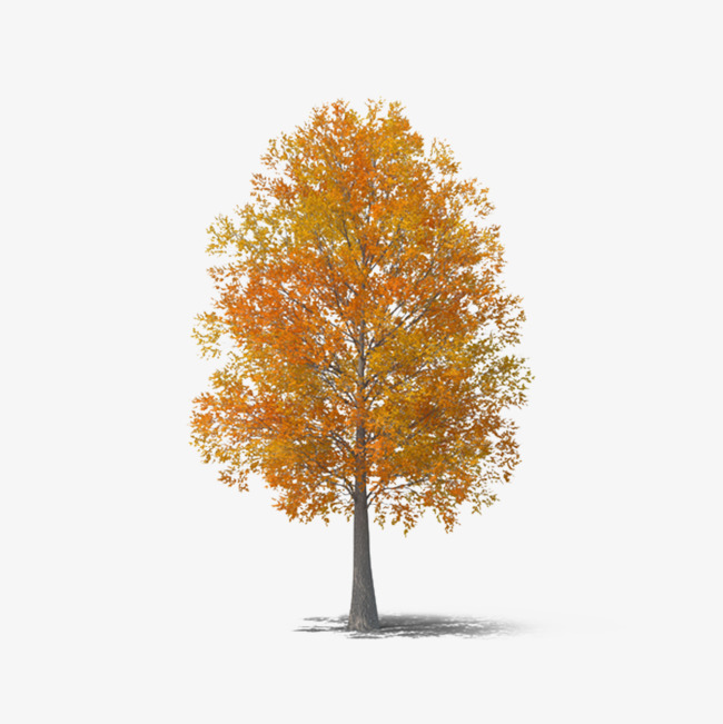 fall tree Autumn tree clipart fall image and for free jpg